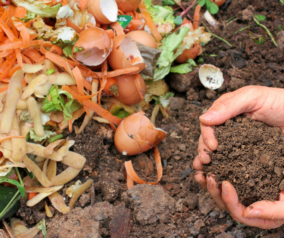 Image of fruit and veg peelings about to go in a compost heap